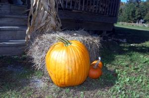 pumpkin-big