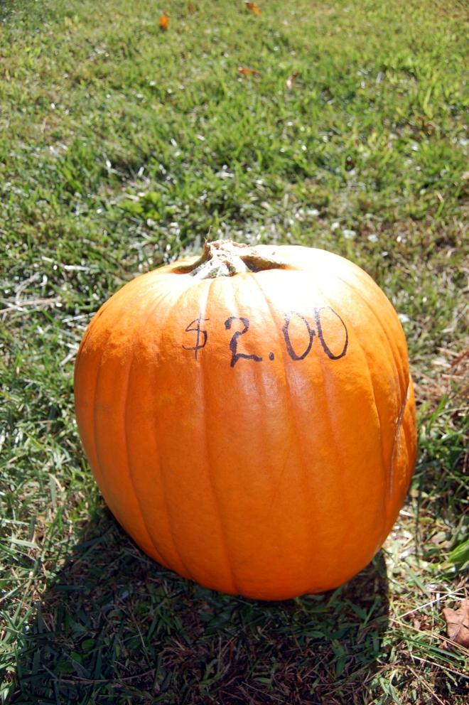 pumpkin-medium